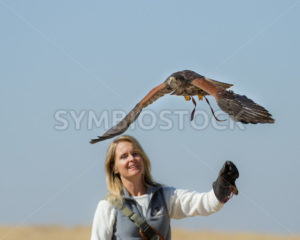 BOISE, IDAHO - OCTOBER 7 : Unidentified trainer at World Center for the Birds of Prey handling a peregrine falcone on October 7th, 2012. - Shot Your show